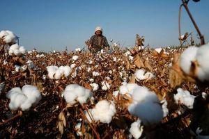 Mỹ: Các tập đoàn may mặc muốn chặn hàng dệt may từ Trung Quốc