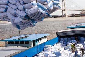 Gạo Việt đã tự tin bước ra thế giới