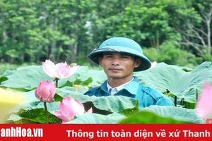 'Hái' tiền tỷ nhờ trồng cây sen Nhật