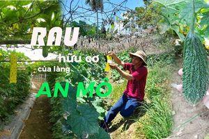 Rau hữu cơ của làng An Mô
