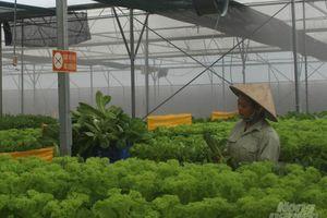 Cánh đồng lớn nâng giá trị sản phẩm cây trồng