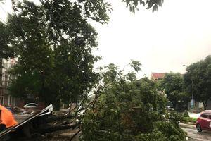 Thành phố Vinh nhiều cây đổ do mưa bão số 5