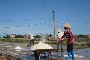 Nam Định: Muối biển vẫn xuất ngoại đều đặn
