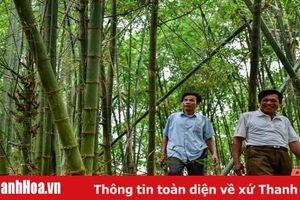Rừng luồng khuyến học ở xứ Thanh