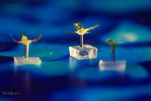 Robot thu gom chất ô nhiễm trong nước