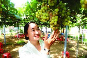 Khởi nghiệp trồng nho ở xứ Dừa