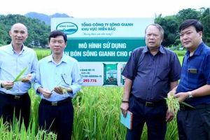 Phân bón Sông Gianh: Kiến tạo phát triển nông nghiệp dinh dưỡng