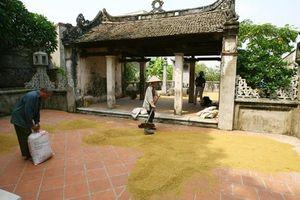 Nỗi niềm của làng nghề nón Chuông