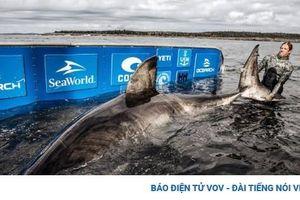 Phát hiện cá mập khổng lồ nặng 1,6 tấn được mệnh danh 'nữ hoàng biển cả' ở Canada