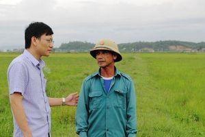 Huyện cấp 8 tạ lúa giống cho dân, xã 'ngâm kho' hết hạn nên đem bán cho vịt ăn