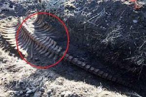 Bí ẩn bộ xương không đầu được phát hiện tại Nga
