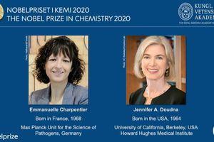 Giải Nobel Hóa học 2020 được trao cho hai nhà khoa học nữ đã phát triển phương pháp chỉnh sửa gene