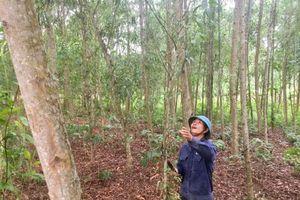 Đi lên dưới tán cây rừng