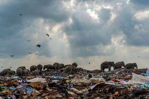 Giải nhất cuộc thi ảnh thiên nhiên cho bức 'đàn voi ăn rác'