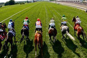 Hà Nội đẩy nhanh tiến độ trường đua ngựa ở Sóc Sơn