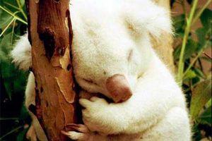 Những con vật độc đáo với màu trắng đáng yêu của tự nhiên