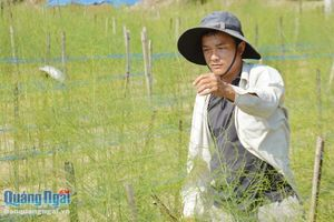 Vùng chuyên canh rau màu: Nơi phát triển, chỗ chật vật tìm đầu ra
