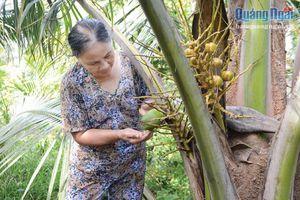 Ngọt, đắng cùng cây dừa xiêm