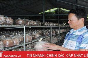 Người dân Hà Tĩnh sản xuất hơn 400 nghìn phôi nấm cho vụ mới