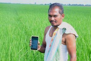 Bắt sâu bằng điện thoại ở Ấn Độ