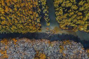 Rừng ngập mặn xứ Huế đẹp nao lòng trước khi xảy ra lũ lụt