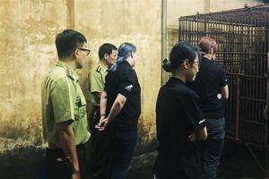 Cứu hộ thành công 1 cá thể gấu ngựa tại Hà Nội