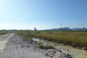 Quảng Ninh: Dự án 'treo' hơn 10 năm… trở thành nơi chăn bò