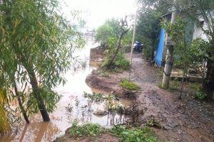 ĐBSCL: Nhiều vườn cây ăn trái thiệt hại do triều cường dâng cao