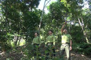Tuyên Quang: Lâm Bình bảo vệ, phát triển rừng