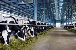 Doanh nghiệp ngành sữa giữ vững thị trường nội địa báo lãi khủng trong quý III/2020
