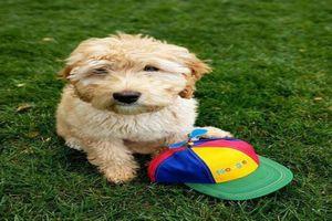 Những chú cún cưng 'cute lạc lối' của những tỉ phú công nghệ