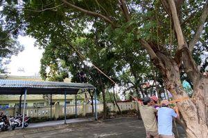 Trường học khẩn trương chèn chống phòng bão số 9