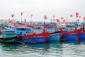 Tàu, thuyền ngư dân Quảng Ngãi đã vào nơi neo đậu an toàn