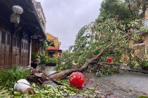 Ý nghĩa đằng sau tên bão Molave