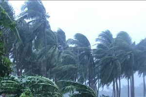 Bão số 9 tiến gần vào đất liền, cây xanh gãy đổ, gió mạnh dần