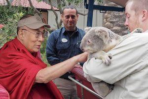Nhân Ngày Động vật Thế giới 4-10 : Đức Dalai Lama kêu gọi ăn chay