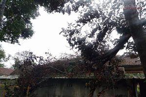 Quảng Ngãi : Bão số 9 đổ bộ, tổ đình Thiên Ấn bị hư hại