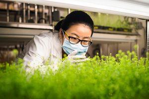 Medicago sẽ cung ứng 76 triệu liều vắc-xin kháng COVID-19 có nguồn gốc từ thực vật
