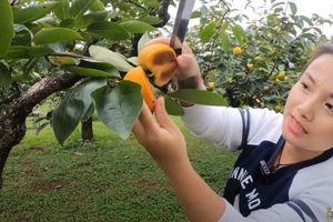 Cả nhà Quỳnh Trần JP no nê hồng chín cây chỉ với 360 nghìn đồng
