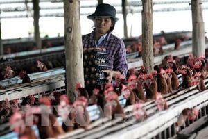 Thái Lan có nguy cơ đối mặt với tình trạng thiếu hụt lao động