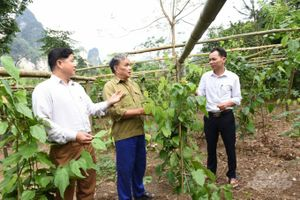 Tuyên Quang: Trồng rau rừng không đủ bán