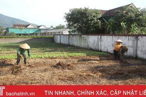 Hà Tĩnh đề xuất Bộ NN&PTNT hỗ trợ 3 tỷ đồng mua hạt giống