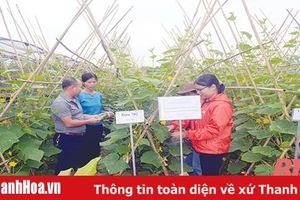 Chuyện nghiên cứu, khảo nghiệm, xây dựng quy trình kỹ thuật canh tác một số cây trồng bản địa theo hướng hữu cơ