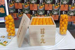 Thùng quýt Nhật Bản giá gần 10.000 USD