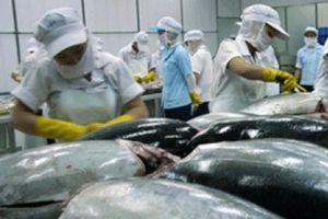 Xuất khẩu thủy sản: Mặt hàng cá Ngừ xuất sang Mỹ tăng trưởng trở lại