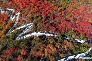Mãn nhãn với khung cảnh mùa thu đẹp như tranh vẽ ở ngọn núi Thái Hành Sơn