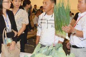 Kết nối, xúc tiến thương mại tiêu thụ nông sản an toàn thành phố Hà Nội năm 2020