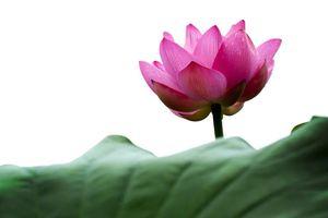 Tìm hiểu nghĩa của từ 'thâm' trong Bát-nhã Tâm kinh