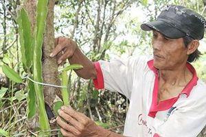 Nông dân sản xuất 'thuận thiên', thu lợi nhuận cao