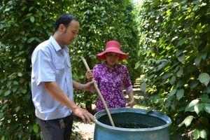 Nông dân hiến kế cách 'sống khỏe' với cây tiêu